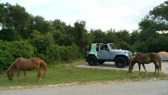 Camping at Assateague Island National Seashore