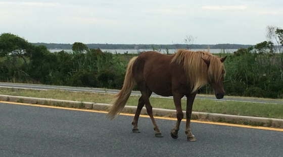 Running at Assateague Island National Seashore